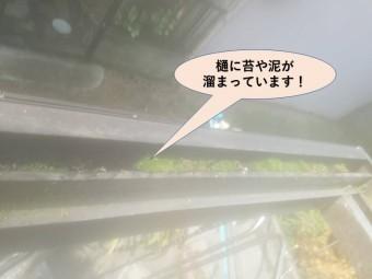 岸和田市のテラス屋根の樋に苔や泥が溜まっています