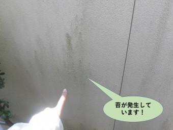 岸和田市の外壁に苔が発生しています