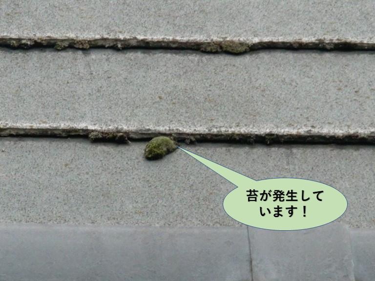 和泉市の苔が発生しています