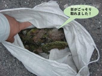 岸和田市のカーポートの苔がごっそり取れました