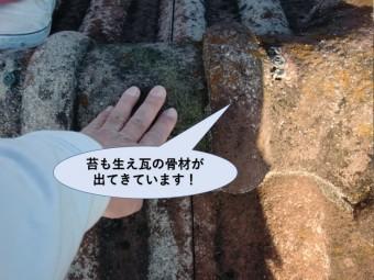 岸和田市の屋根に全体的に苔が生えています!