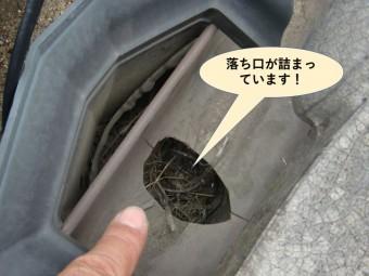 泉大津市の樋の落ち口が詰まっています
