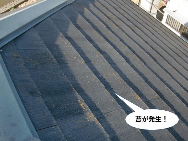 泉大津市の屋根に苔が発生