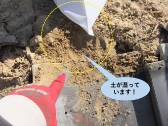 岸和田市の棟瓦の下の土が湿っています!