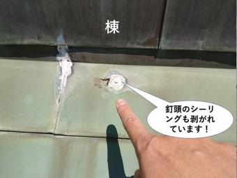 岸和田市の棟の際の釘頭のシーリングも剥がれています