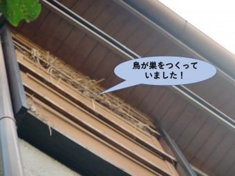 岸和田市の戸袋の中に鳥が巣をつくっていました!