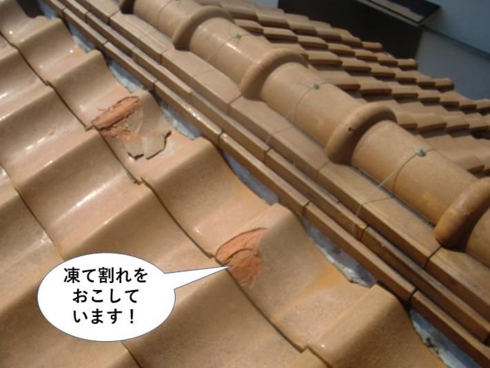 和泉市の瓦の凍て割れ