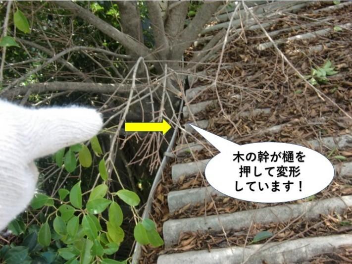 岸和田市の木の幹が樋を押して変形しています
