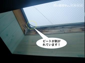 和泉市の天窓のビートが剥がれています