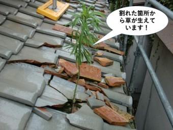 泉佐野市の割れた箇所から草が生えています