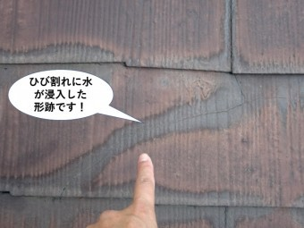貝塚市の屋根のひび割れに水が浸入した形跡です