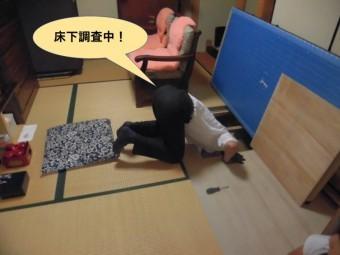 岸和田市の床下調査中