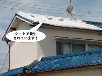 岸和田市の屋根をシートで養生されています