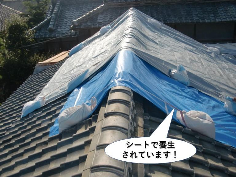 和泉市の屋根をシートで養生されています