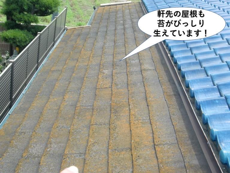 岸和田市の軒先の屋根にも苔が生えています