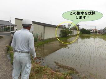 岸和田市の貸しガレージの樹木を伐採