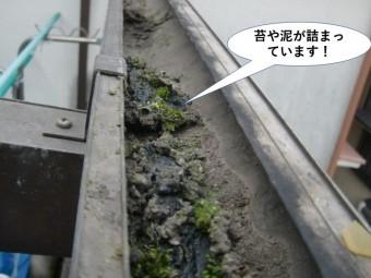 阪南市のテラスの雨樋に苔や泥が詰まっています