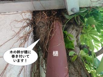 岸和田市の木の幹が樋に巻き付いています
