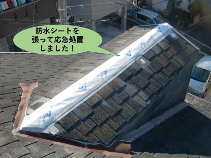 和泉市の屋根を防水シートを張って応急処置