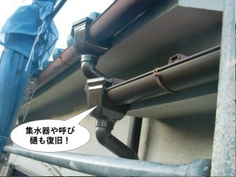 泉大津市の集水器や呼び樋も復旧