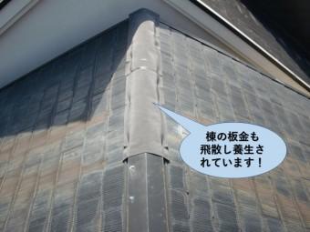 熊取町の棟の板金も飛散し養生されています