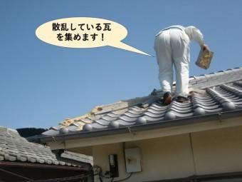 泉大津市の散乱している瓦を集めます