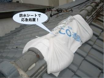 泉佐野市の棟を防水シートで応急処置