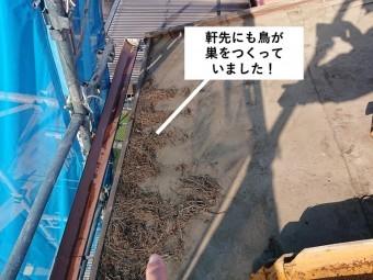 和泉市の屋根の軒先にも鳥が巣をつくっていました!