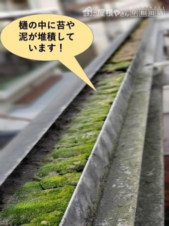 泉大津市のテラスの樋の中に苔などが堆積