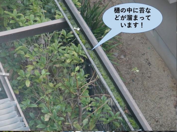和泉市のテラスの樋の中に苔などが溜まっています