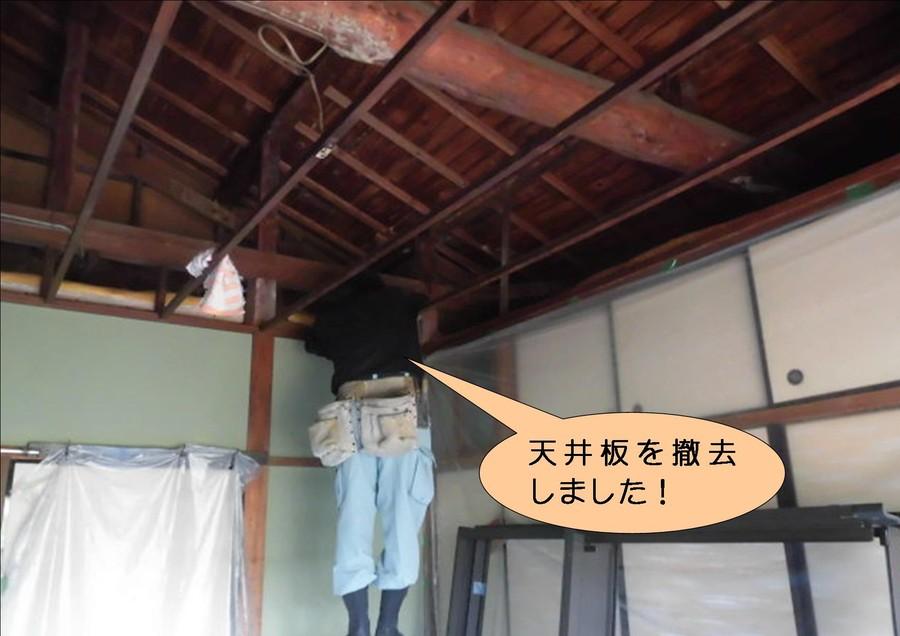 泉北郡忠岡町で和室の天井板撤去