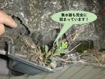 岸和田市の貸しガレージの集水器も完全に詰まっています