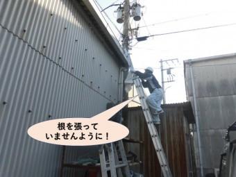 岸和田市の雨樋を清掃します!