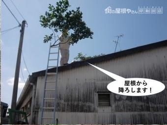 岸和田市の倉庫の屋根から木の枝を降ろします